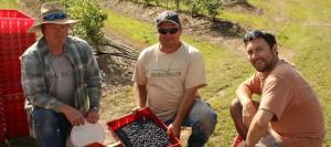 Blueberry Farmers