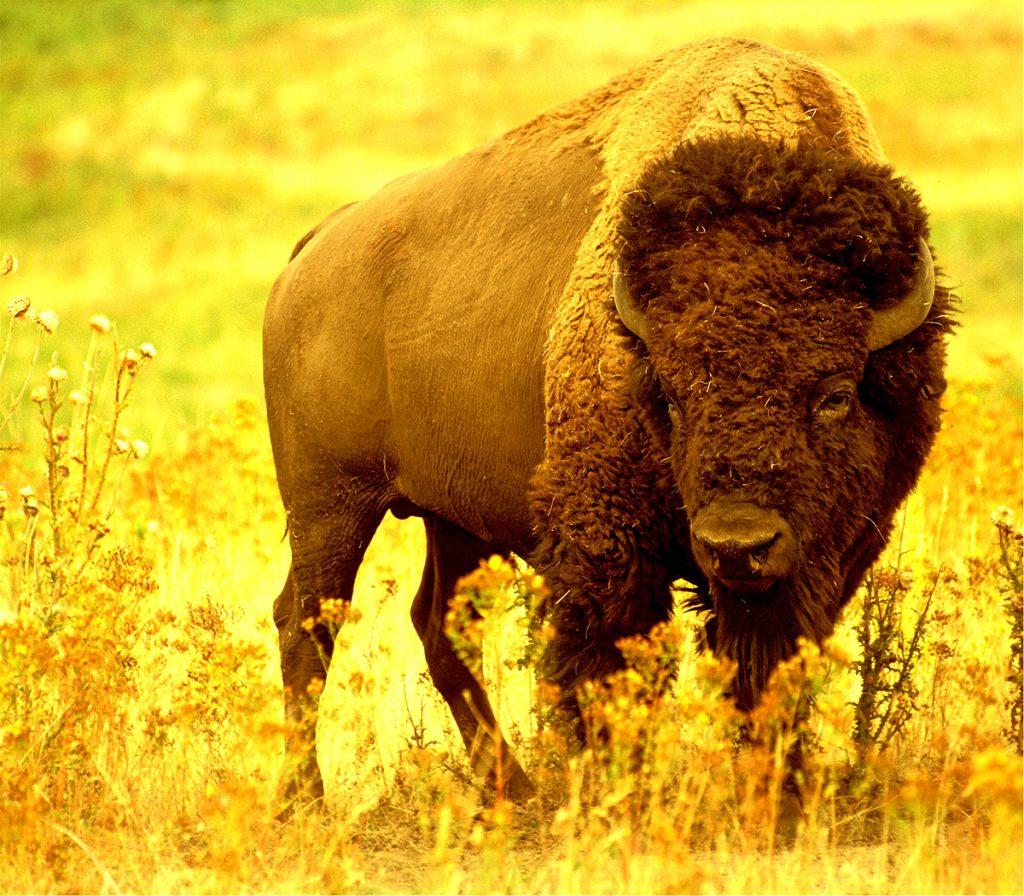 Buffalo - Last Bar